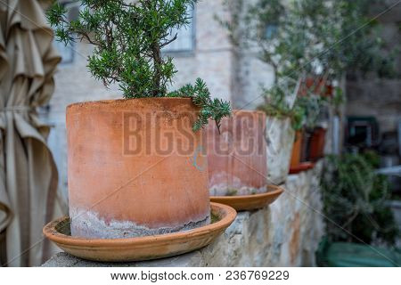 A Row Of Plants In Terra Cotta Pots