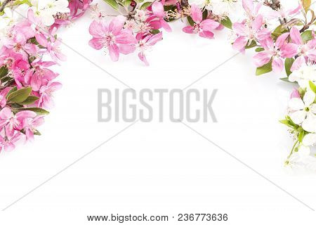 The Spring Blossom Isolated On White Background