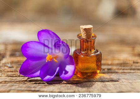Foalfoot Essential Oil In A Beautiful Bottle On The Table
