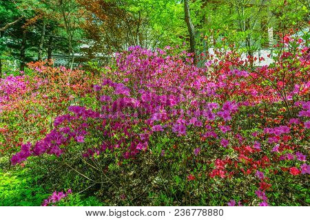 Red And Purple Spring Flowers Under Canopy Of Trees On A Sunny Afternoon.