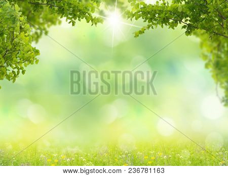 Spring meadow with green leaves. Nature background and  blurred bokeh.