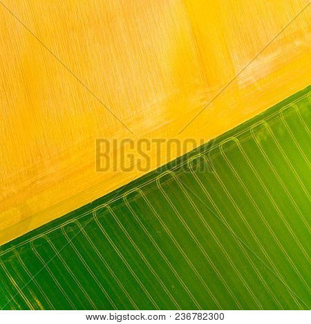 Aerial view to green and brown fields with tractor tracks. Agricultural landscape from above.