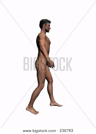 Anatomy Of The Man Walking 1.