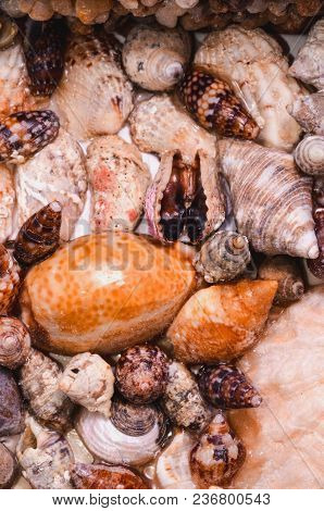 Texture Background Of Colored Round Sea Shells