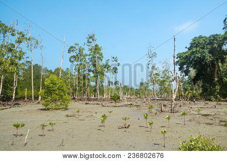 Stunning View Of Havelock Island Beach, Beautiful Tree In The Sea Water, Andaman Nicobar Islands. Dr