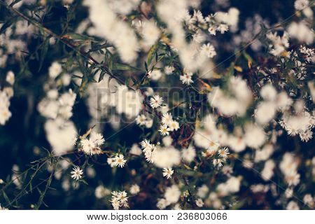 White flowers filed