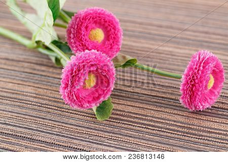 Pink Artificial Flowers On Cloth Background, Closeup Picture.