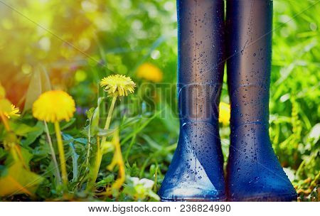Rubber Boots Covered With Water Drops On Spring Garden Background