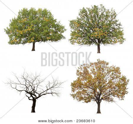 autumn trees  isolated on white background.