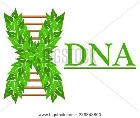 Logo In The Form Of Dna, For Business Cards.