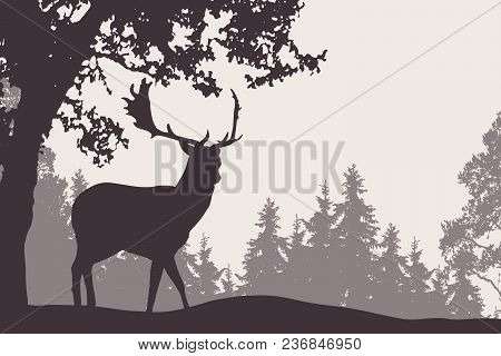 Vector Illustration Of A Fallow Deer Standing Under A Deciduous Tree With Coniferous Forest In The B