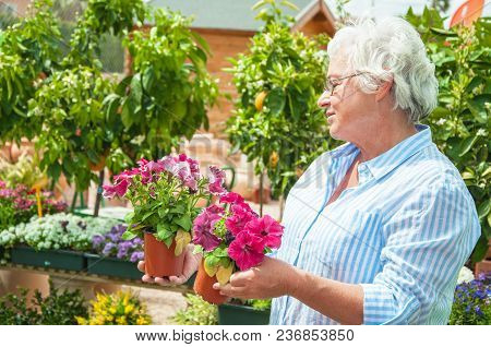 Garden Centre Senior Lady Hold Potted Flowers