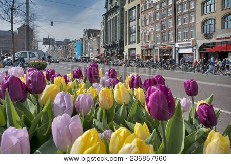 Amsterdam, Holland - 14 April 2018 Facades Of Dutch Houses Over Canal With Fresh Tulip Flowers, Amst