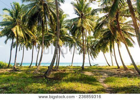 Beautiful Palm Trees With A Lush Crown Against The Sea And Blue Sky. . Vacation Concept. Palm Grove