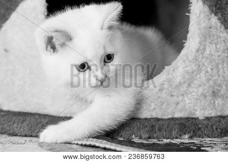 Beautiful Kitten In The Room Busy With Chores