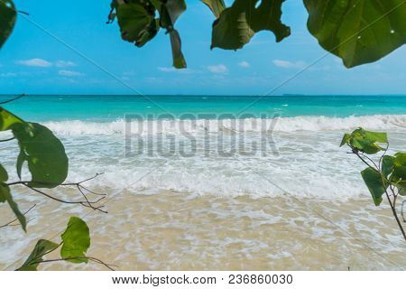 Big Tree With Green Leaf Shadow Over The White Sand And Beautiful Beach Of Blue Sea Under Clear Sky.