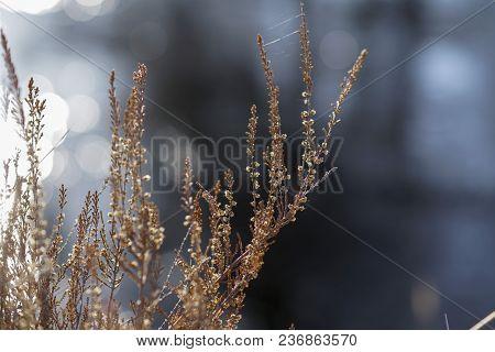 Dream Grass In Early Spring Focus On Grass In Meadow, Early Morning In Foggy Day, Feeling Alone But