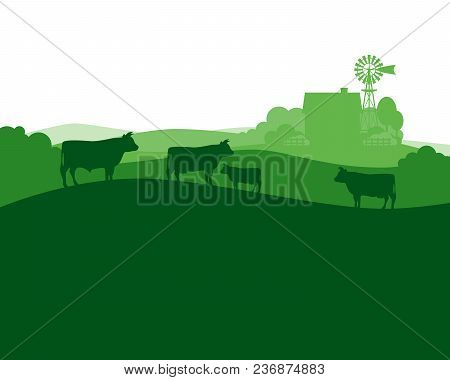 Rural Landscape With Milk Farm And Herd Cows.