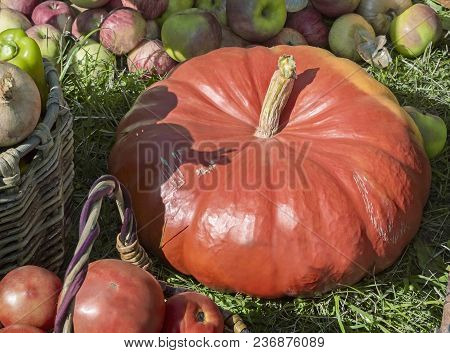 A Variety Of Vegetables: Large Pumpkin, Apples, Onions, Tomatoes Are Sold At The Fair.