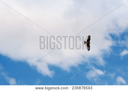 Eagle Soaring In The Blue Sky With Clouds