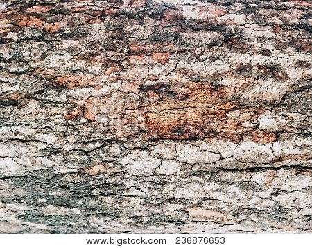 The Bark Tree Texture Peeling And See The Brown, Beige And Red Color In Close-up Shot