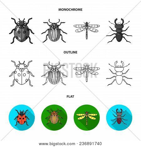 Wrecker, Parasite, Nature, Butterfly .insects Set Collection Icons In Flat, Outline, Monochrome Styl