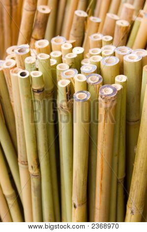 Bamboo Sticks Vertical