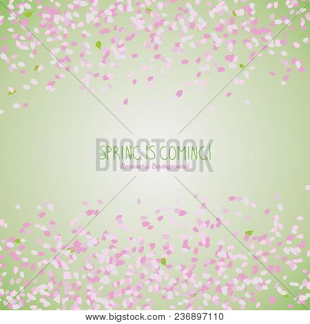 Simple Romantic Frame For Text. Sakura Petals. Spring Flyer. Blooming Cherry Blossom Petals. Hanami.