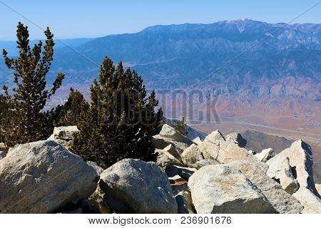 Rugged Rocky Terrain Overlooking The Desert With Scattered Alpine Pine Trees Taken At Mt San Jacinto