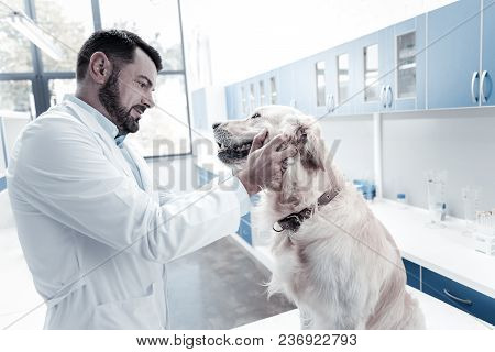 Now Smile. Nice Smart Handsome Man Holding Dogs Head And Looking At Its Teeth While Doing Medical Ch