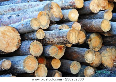 Pine Round Timber On Building Construction Site