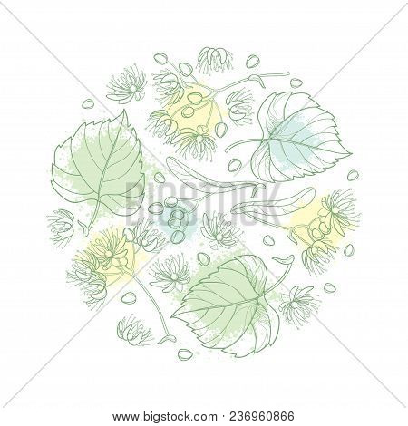 Vector Round Composition Of Outline Linden Or Tilia Or Basswood Flower Bunch, Bract, Fruit And Ornat