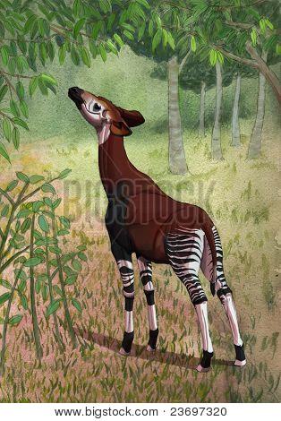 Okapi In Forest