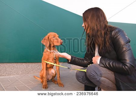 A Girl Feeds A Beautiful Young Dog While Walking Around The City. The Brown Dog And The Mistress Sit