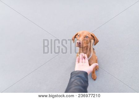 The Human Hand Gives Food To The Dog On The Background Of Asphalt. Help The Dog.