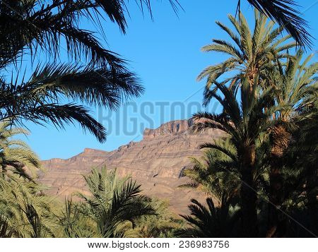 Scenery At Green Trees In Oasis Landscapes In Central Morocco In Old Village Of Oulad Near Zagora Ci
