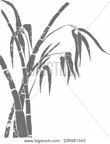 Bamboo Background. Bamboo Stems With Leaves On White Background, Hand Drawn. Vector Illustration.