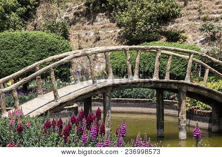 Pond Wooden Bridge Snapdragon Flowers Nature Sunny