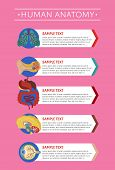 Human anatomy medical poster with internal organs. Kidney, lung, liver, heart, stomach, brain, intestine illustration. Human body physiology systems, healthcare science infographics. poster
