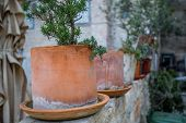 A row of plants in terra cotta pots poster