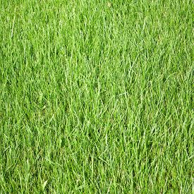 Image Of A Grass In The Garden Close Up