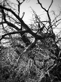Detail Of Bare Branches On Felled Tree. Taken At Dee Meadows (chester, England, Uk). Traditional Hig