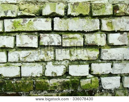 White Brick Wall With Green Moss. Old Texture. Abandoned Brickwall