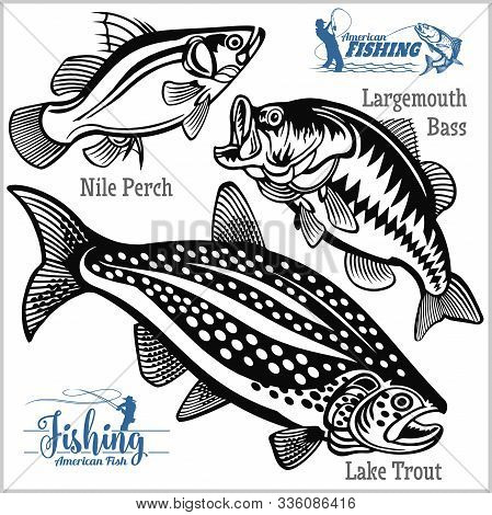 Largemouth Bass, Lake Trout And Nile Perch Fishing On Usa Isolated On White
