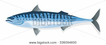 Mackerel With Elongate, Steel-blue Marked With Wavy Black Lines Dorsally Body And Long, Pointed Snou
