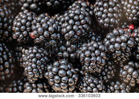 Blackberry Fruit  Blackberries. Background Of Blackberry Fruit. Texture Of Black Berry. Nutritional