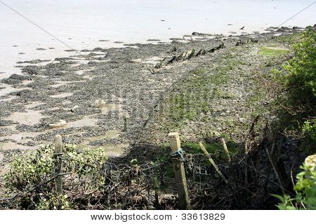 seaweed on a riverbank