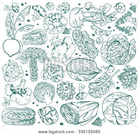 Set Of Different Cabbage. Hand Drawn Vector Outline Sketch Illustration Isolated On White Background
