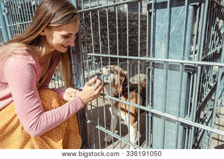 Woman getting to know a dog in the animal shelter