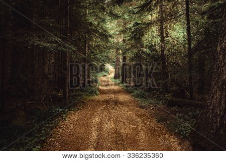 Remote, Unpaved, Winding Country Road In The Dense Forest